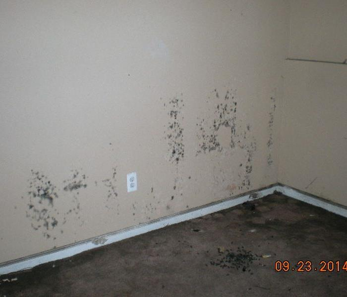 Mold Remediation in a house in Taylor Michigan Before