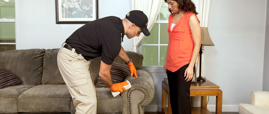 Canton, MI carpet upholstery cleaning